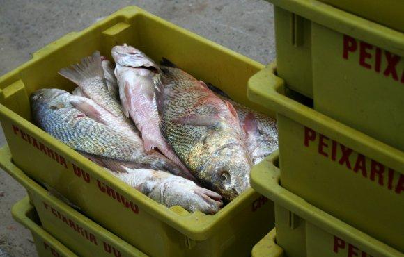 Plantas para el proceso y enlatado de pescado